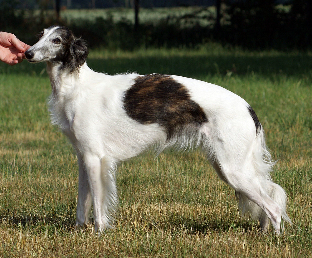 Stacked, Silken Windhound Fay